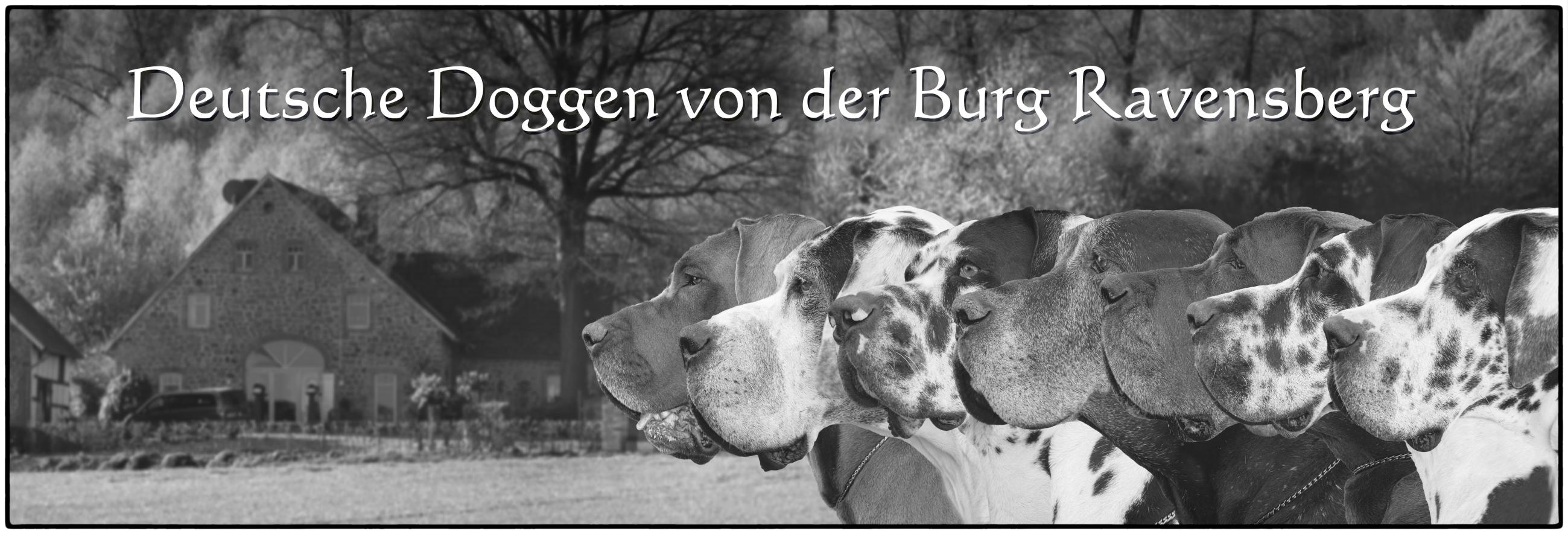 Deutsche Doggen von der Burg Ravensberg